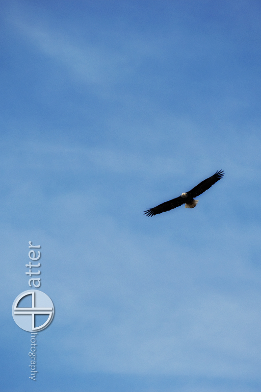 Eagle Soaring Over Highbanks